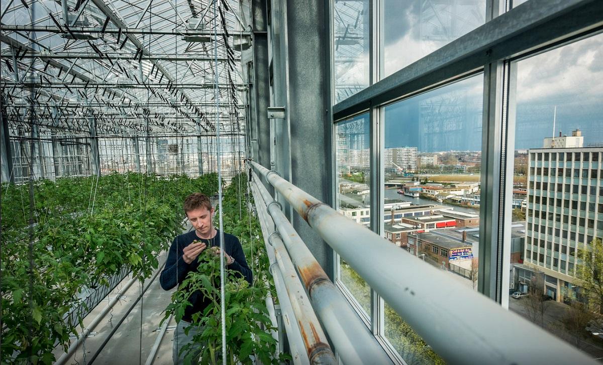 Urban farmers faiiliet