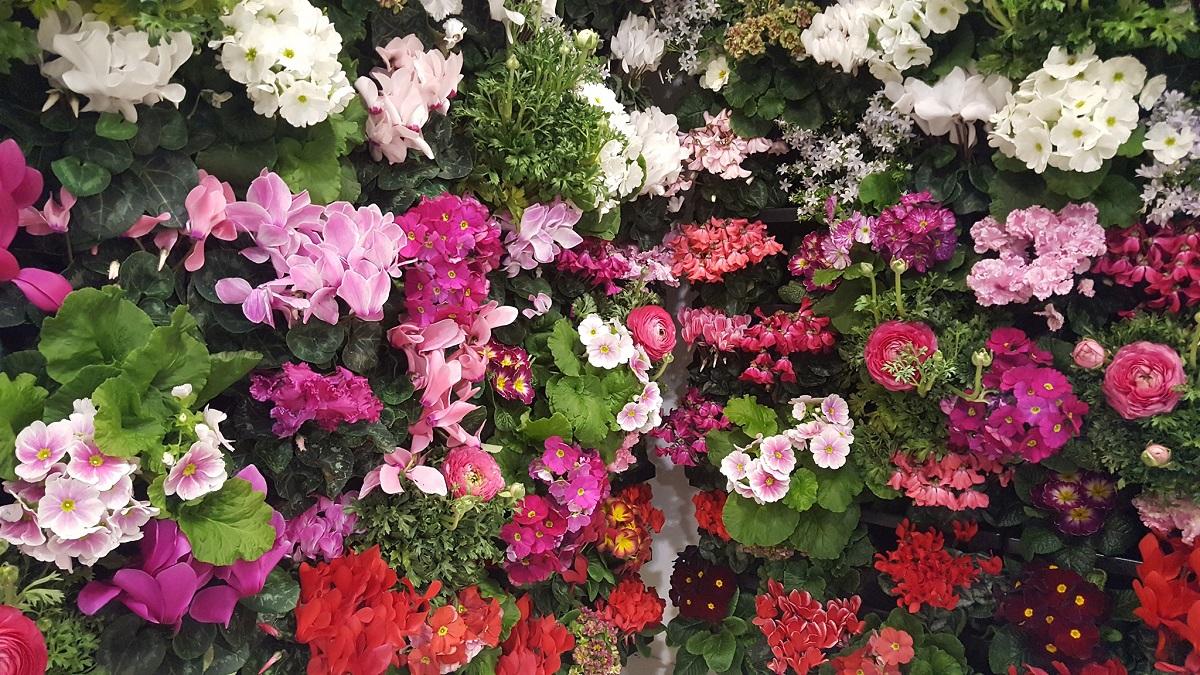 flowers4oxygen