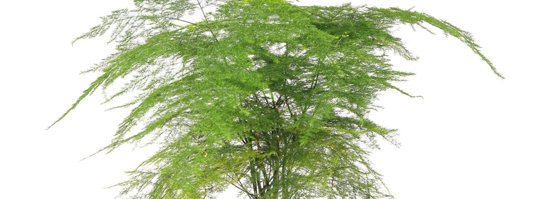 Evanthia blog asparagus