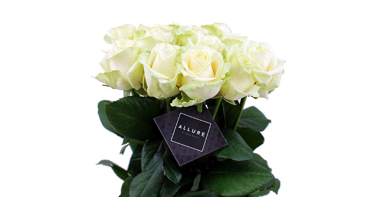Allure by Berg Roses Avalanche