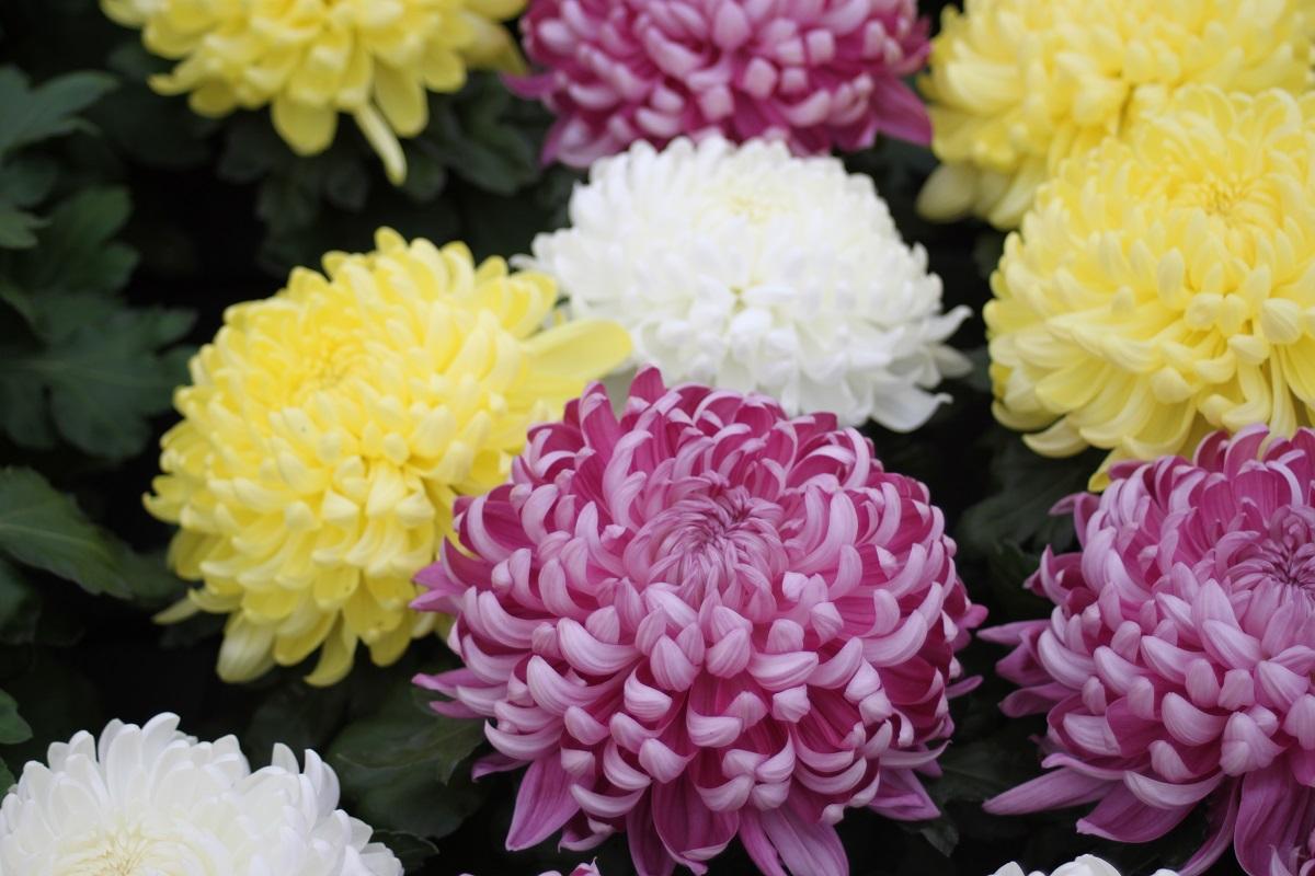 Exportwaarde bloemen en planten op niveau
