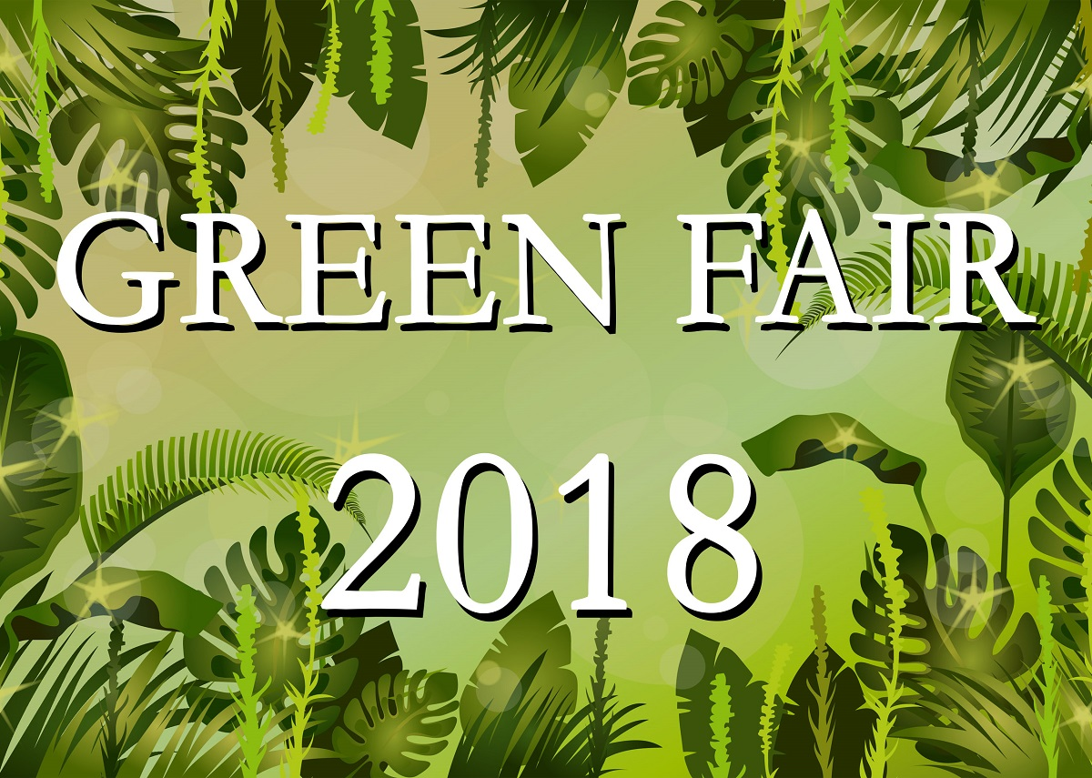 Vireo Green Fair