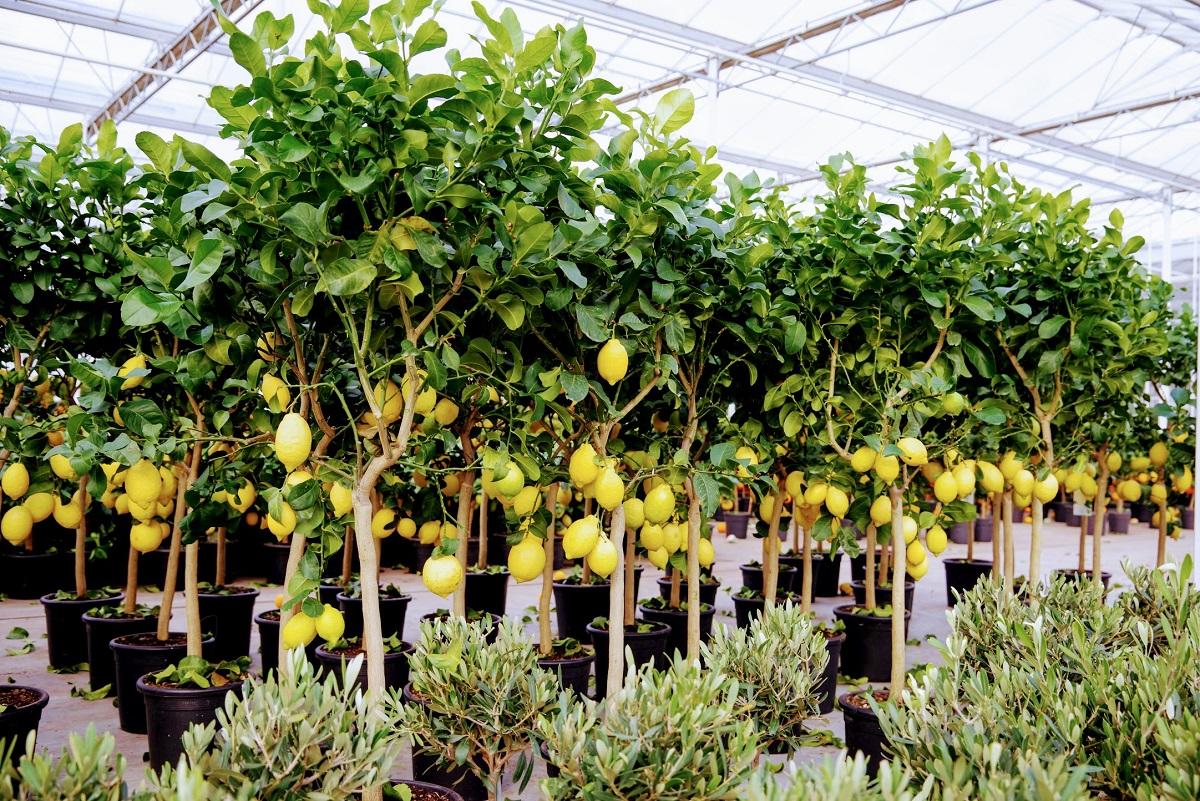 RM Plants Voorjaarsbeurs XXL