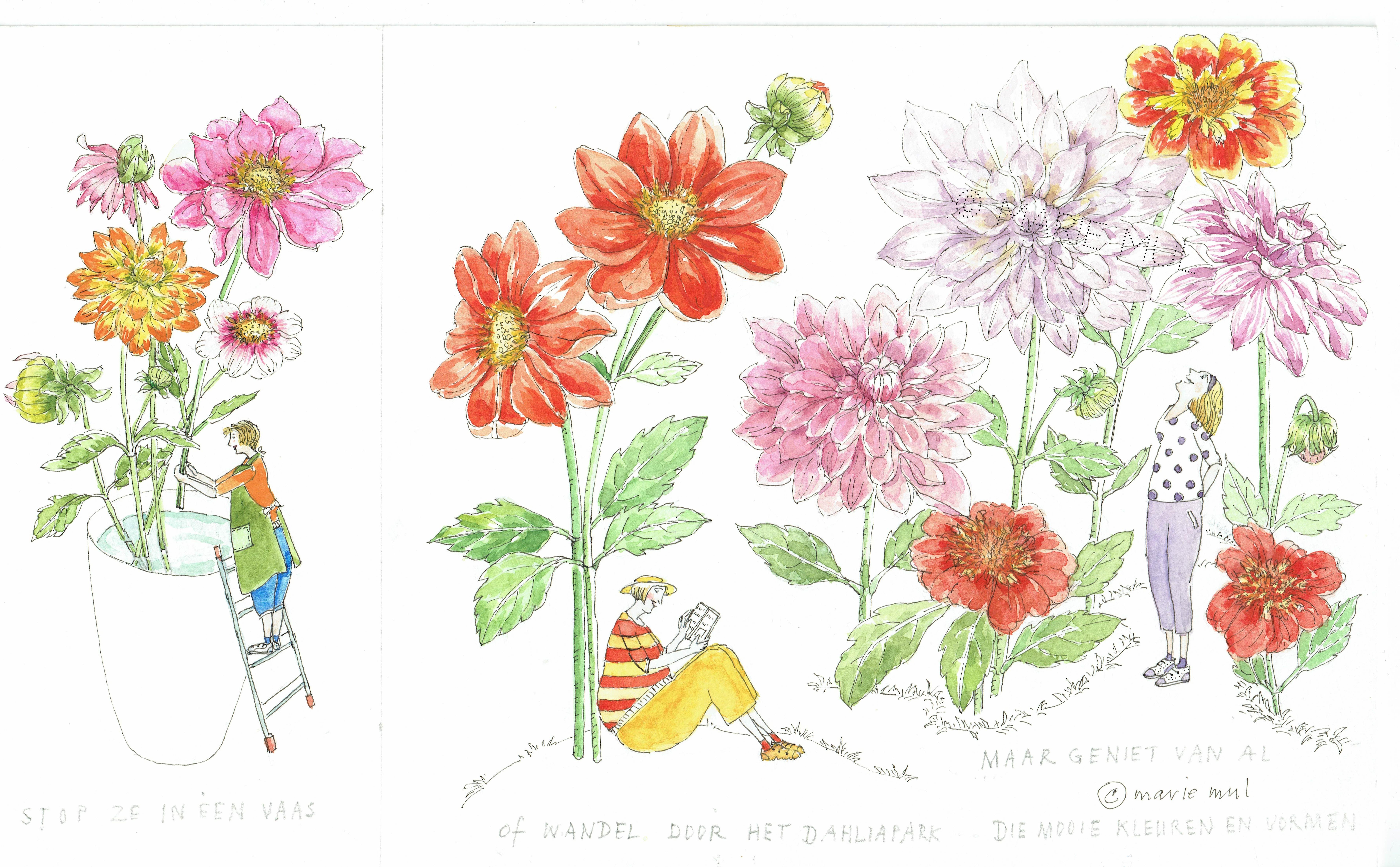 illustraties uit applaus voor de dahlia