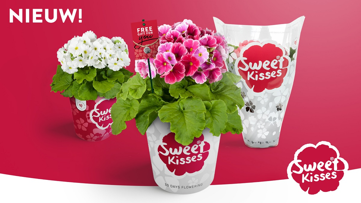 Primula Sweet Kisses
