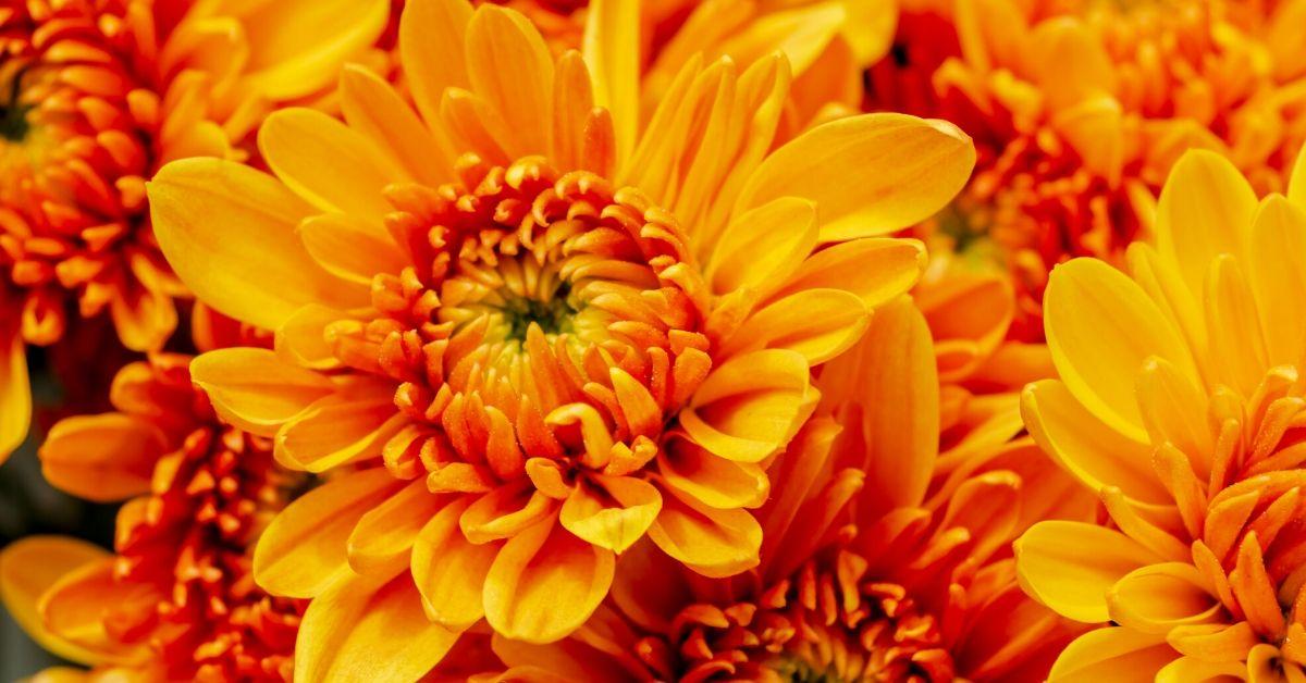 Oranje bloemen Koningsdag