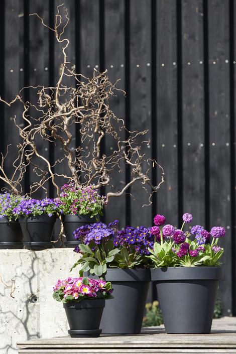tuinplant van de maand februari 2019