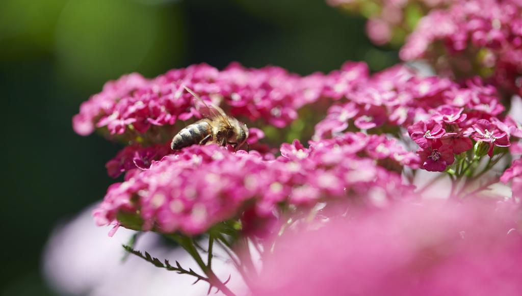 Bijenvrienden